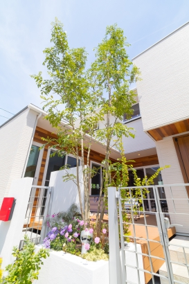 中庭・シンボルツリー
